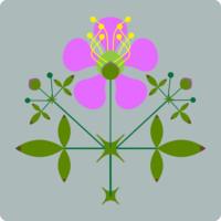 Fagonia laevis - botanical illustration