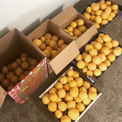 Boxes of grapefruit