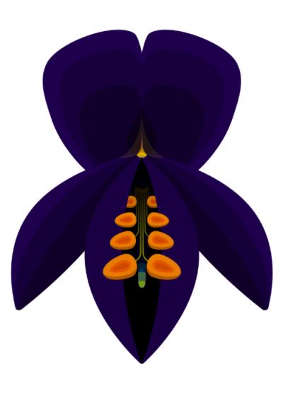 Indigo Bush (Psorothamnus schottii) Botanical Illustration