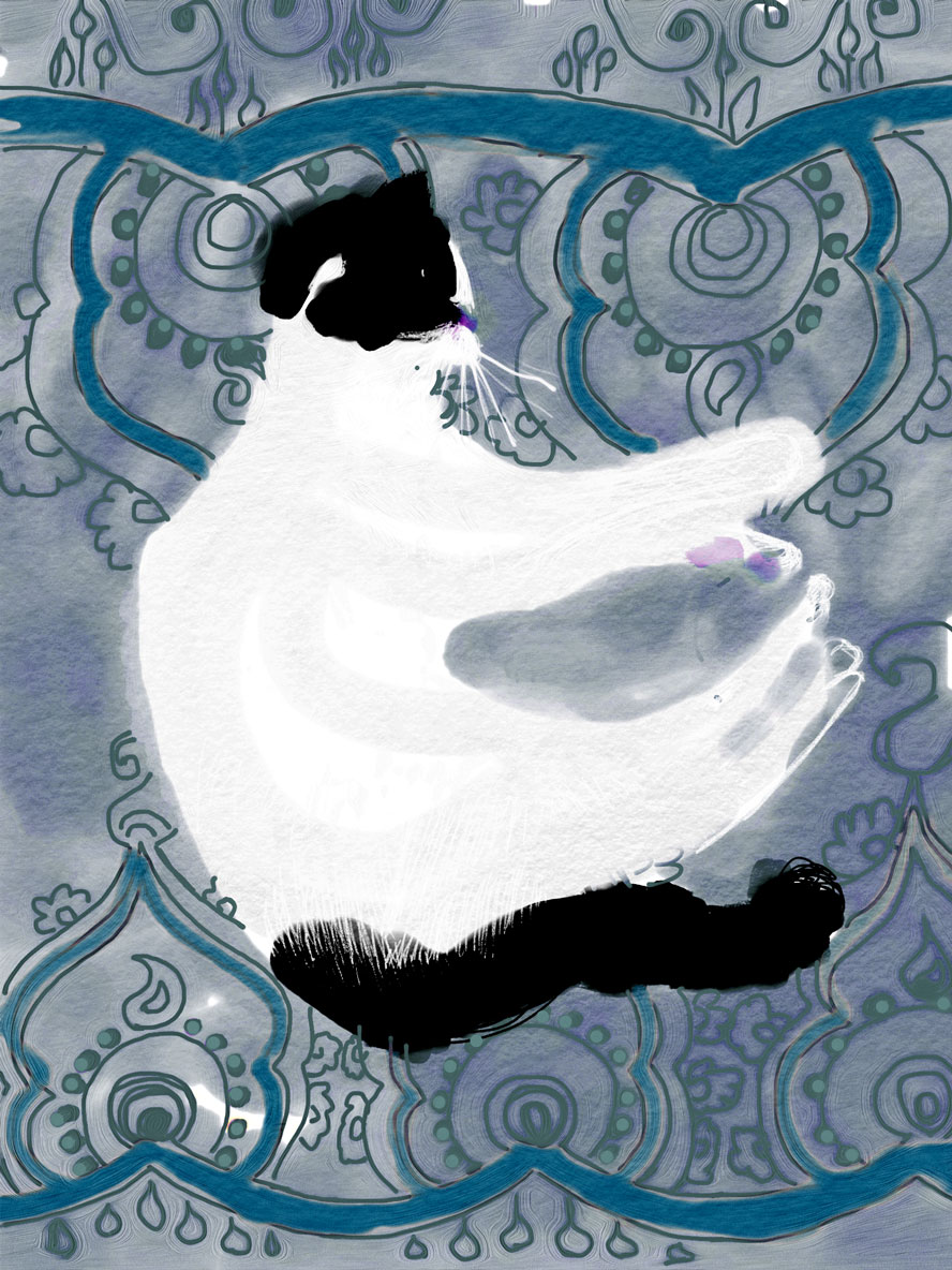 The Dancing Cat: Thomas Does Yogasana