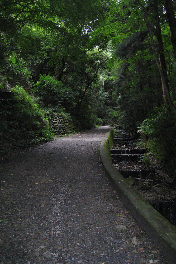 Stone path along green forest in Kyoto