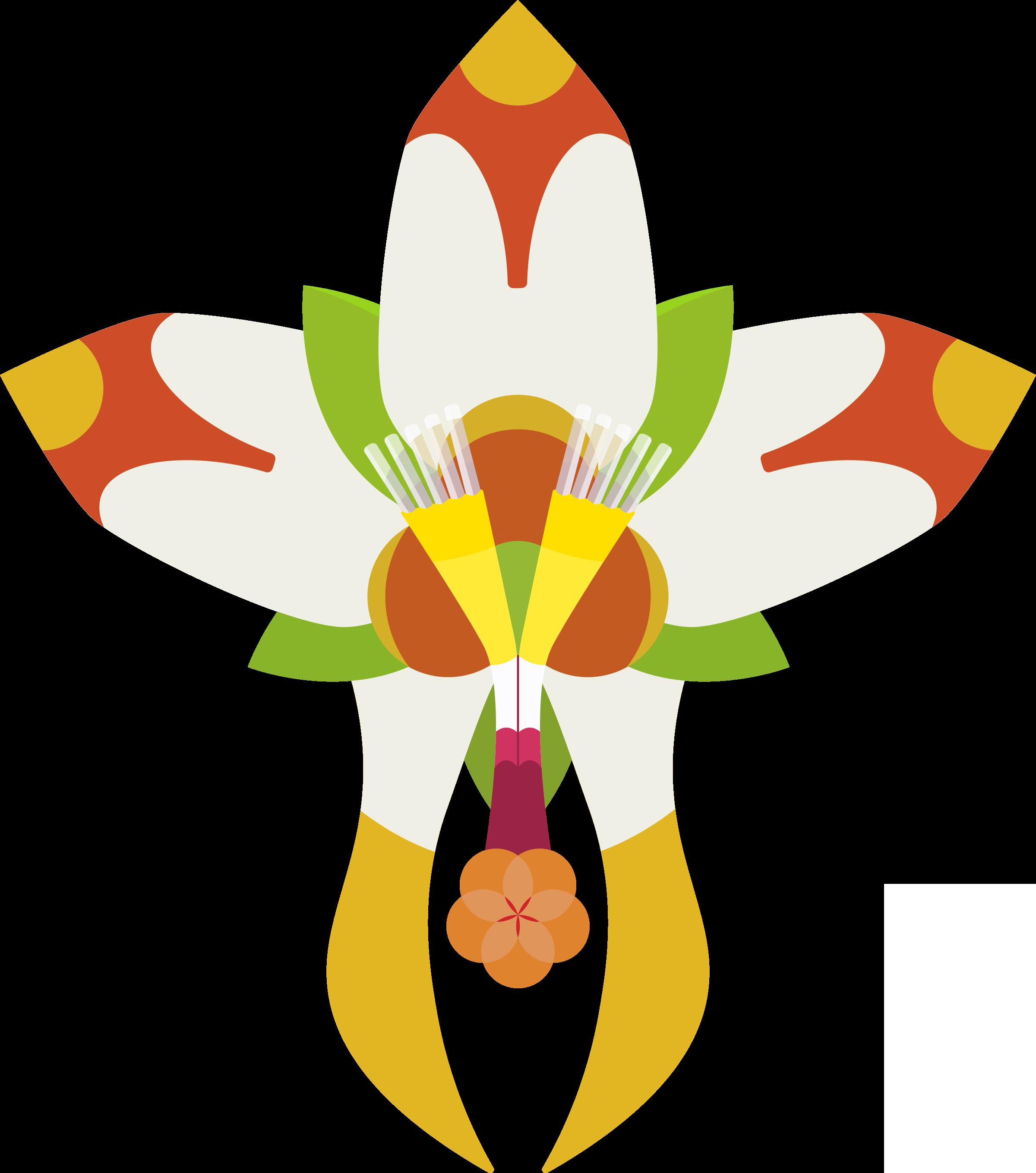 Nemacladus rubescens Design