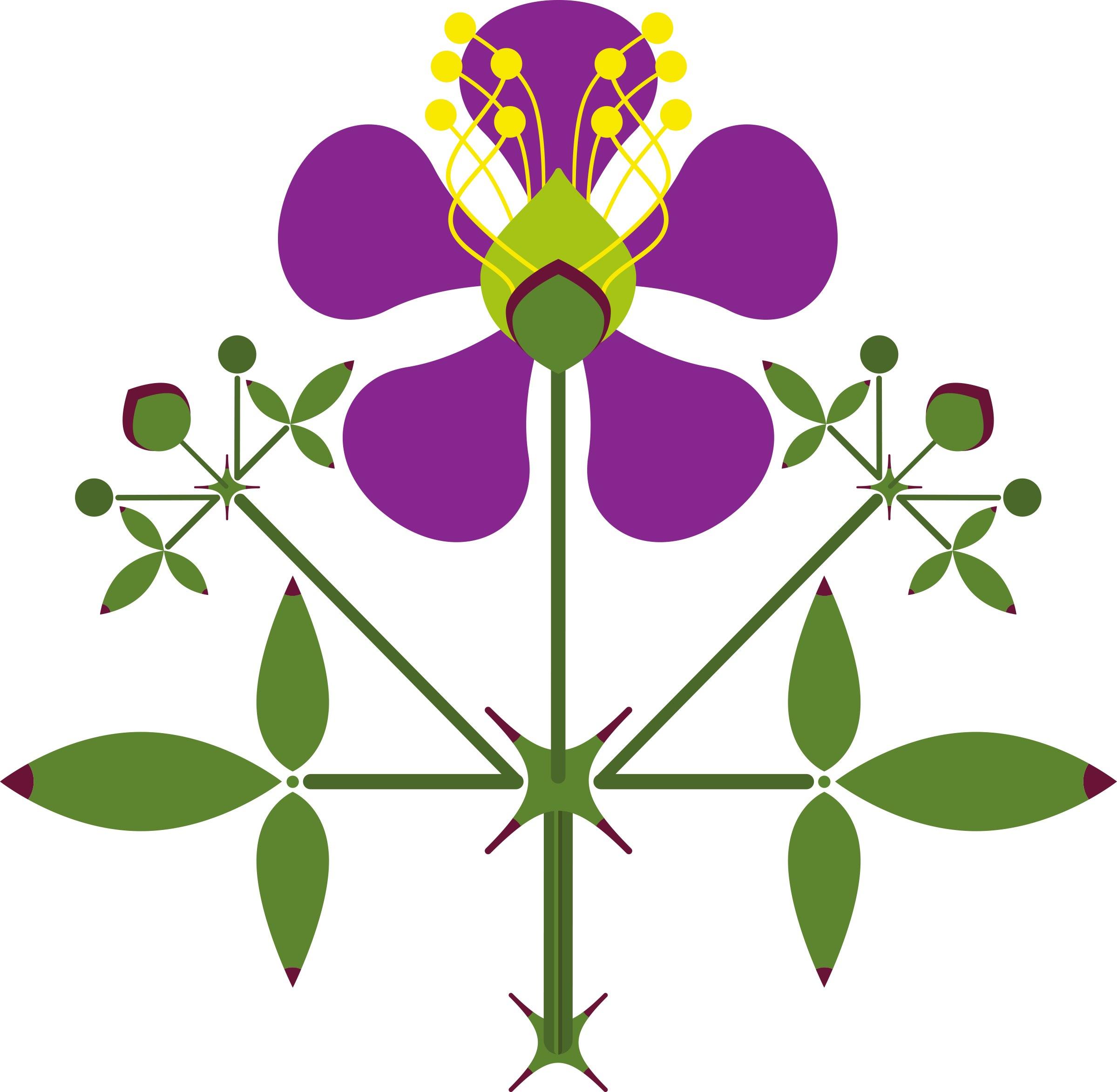 Fagonia laevis Design