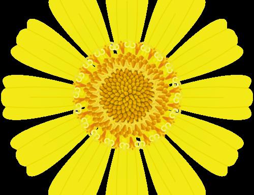 Design: Brittlebush (Encelia farinosa)